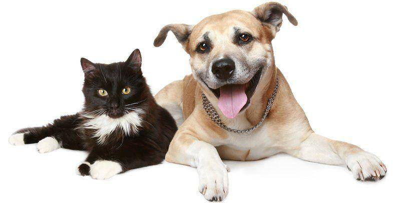 Dogs and cats need vaccines