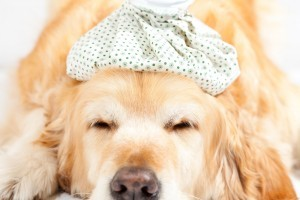 call these local emergency veterinary clinics