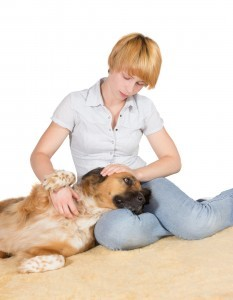 Parvo Treatment in Dogs