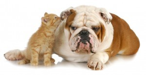 Low Cost Pet Vet Canine Feline Spays Neuters