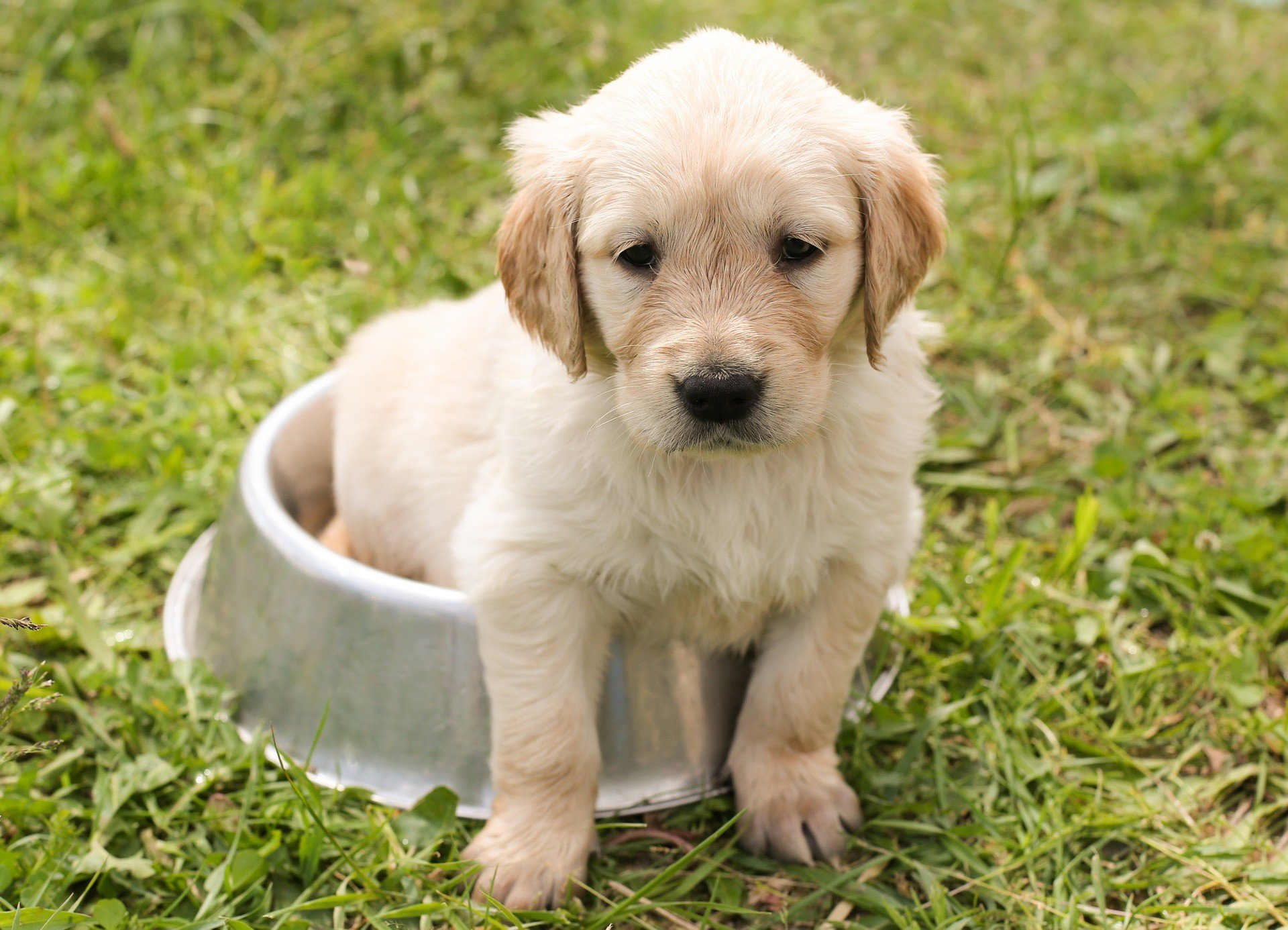 what puppy vaccinations does my puppy need