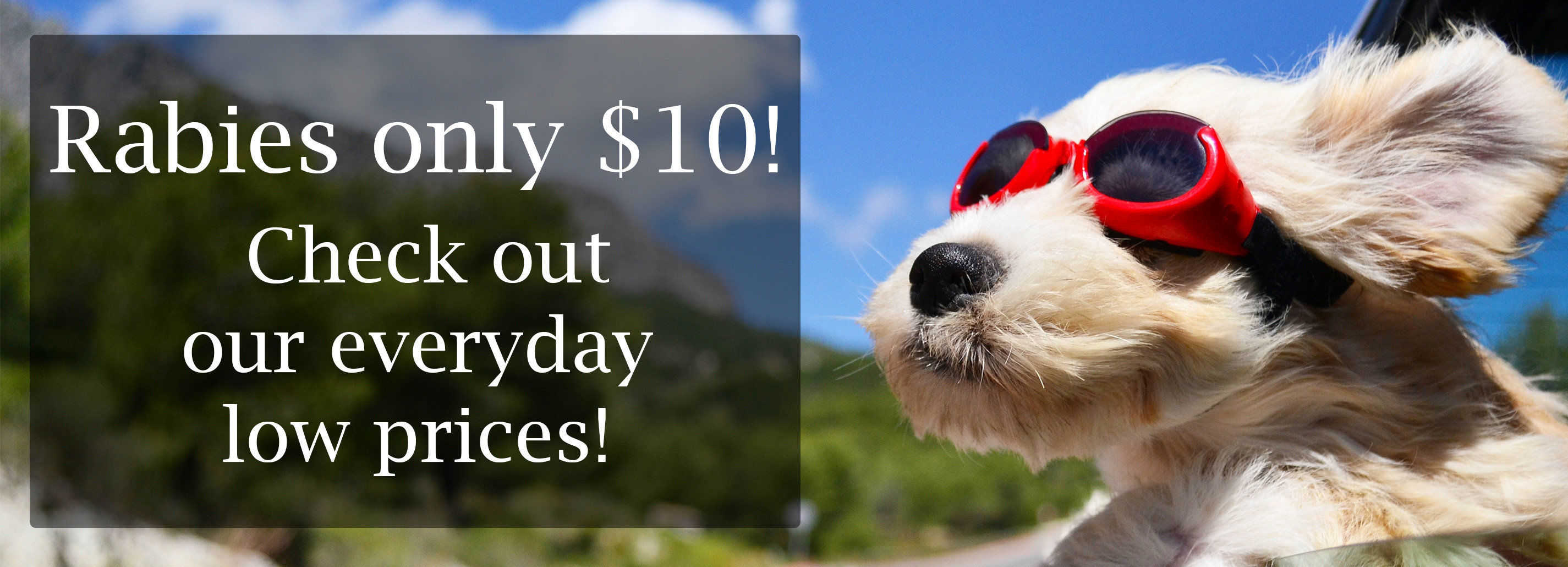 how much do parvo shots for dogs cost