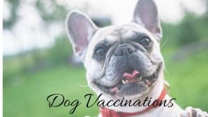 dog affordable pet vaccinations