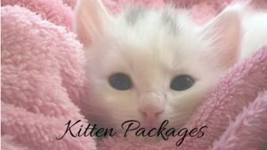 kitten packages