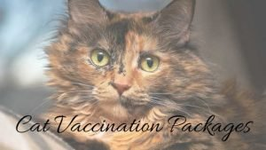 cat vaccination packages