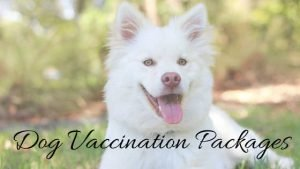dog vaccination packages
