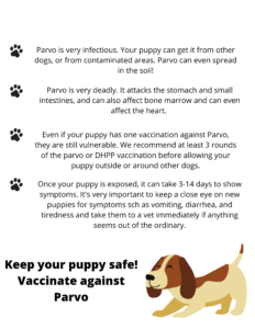 Parvovirus in Dogs