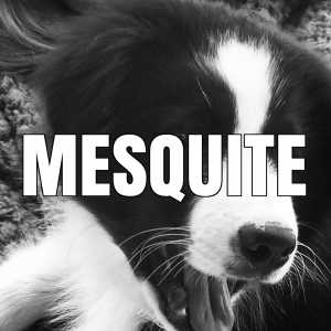 mesquite vaccination clinics