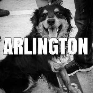 arlington vaccination clinics