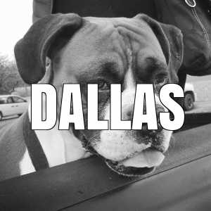 dallas vaccination clinics