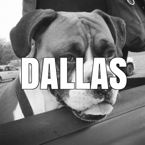 dallasiconedited
