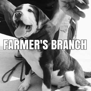 farmers branch vaccination clinics